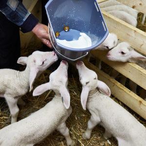 Γάλα Lammomel 60 για αρνιά κατσίκια