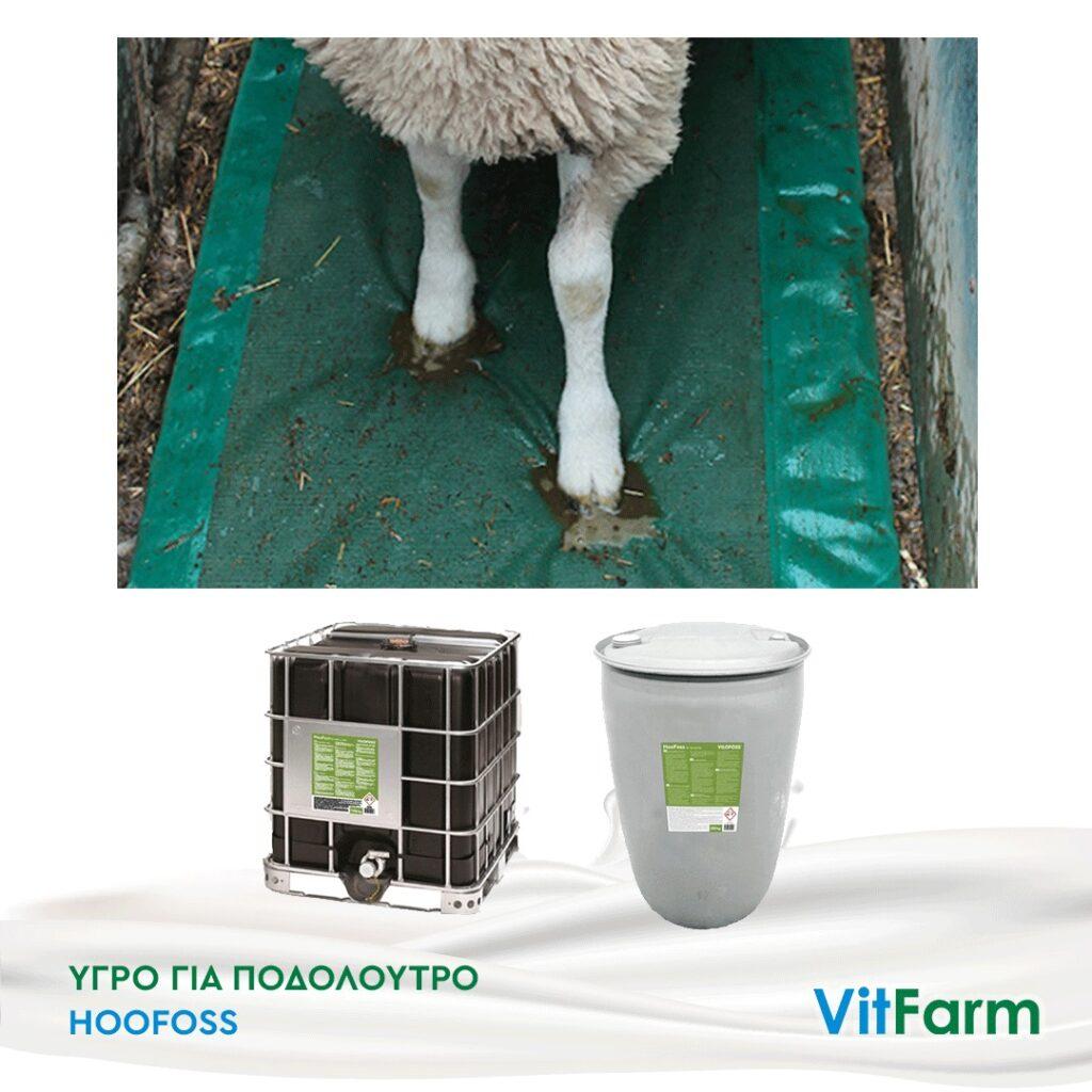 Υγρό για ποδόλουτρο Hoofoss για πρόβατα και αίγες